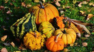 Dýňová sezóna přichází: Existuje mnoho druhů, ale jen některé se hodí do kuchyně