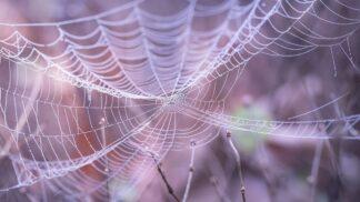 Pavouk v bytě: Pro někoho štěstíčko, pro někoho noční můra