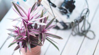 Kde děláme nejčastěji chyby při zalévání pokojových rostlin?