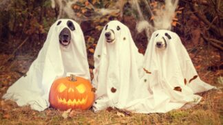 Dýně nejen jako dekorace na Halloween: Pochutnejte si na různých odrůdách této královny podzimu