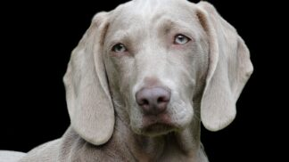Psí eutanazie: Kdy zvažovat, že je lepší vašeho věrného čtyřnohého přítele nechat uspat?