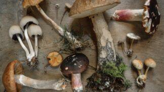 Nevíte co s houbami a smaženice už vás omrzela? Máme tip na chutnou houbovou alternativu