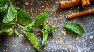 Máta, jak ji neznáte: Vyléčí revma, v létě ochladí a může chutnat i po česneku