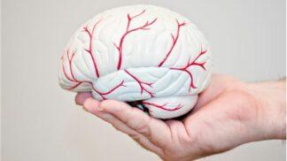 Mozek jako v papiňáku: Ověřená fakta, co vám s hlavou dělá dnešní rychlá doba # Thumbnail