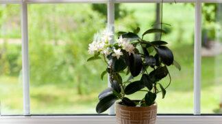 Přírodní osvěžovače vzduchu: Pokojové rostliny, které provoní váš byt