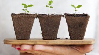 Zbaví vás toxinů a škodlivin: Pokojové rostliny, které se vyplatí mít doma
