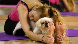 Fitness trendy: Zacvičte si se svým psem nebo kozou # Thumbnail