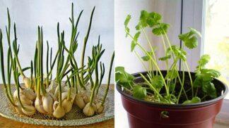 8 druhů zeleniny a bylinek, které vypěstujete i v paneláku. A porostou napořád!
