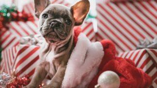 Měsíc do Vánoc: Jak nakoupit dárky snadno, rychle a bez nervů