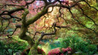 10 nejkrásnějších zahrad světa