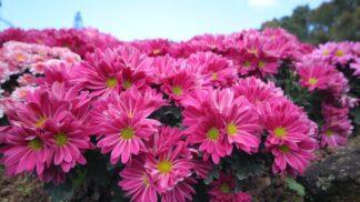 15 nejlepších rostlin pro čištění vzduchu v interiéru podle NASA