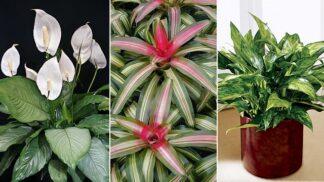 12 rostlin, kterým se daří i v nejtemnějších koutech