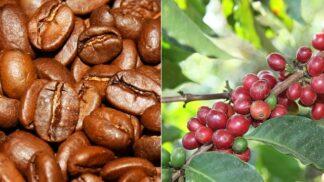 Káva, nebo brusinky? Jak vypadají potraviny předtím, než se dostanou do supermarketů?
