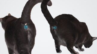 Tento třpytivý šperk promění kočičí pozadí v uhrančivou partii