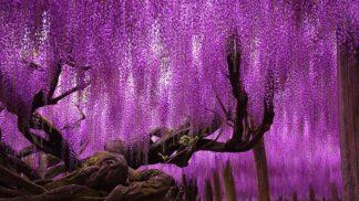 16 nejkrásnějších stromů na planetě