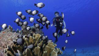 Jak na focení podmořského života: Pár skvělých doporučení od skutečných mistrů svého oboru
