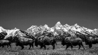10 úchvatných černobílých snímků severoamerické divočiny