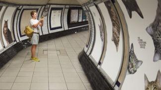 Kočky útočí! V Londýně obsadily stanici metra
