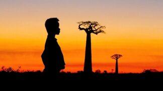Festival Ekotopfilm vypukne už za pár týdnů. Vypustil trailer ke snímku ze srdce baobabových lesů