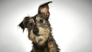 Šokující zjištění o úmrtnosti psů: V polovině případů může za jejich skon rakovina # Thumbnail