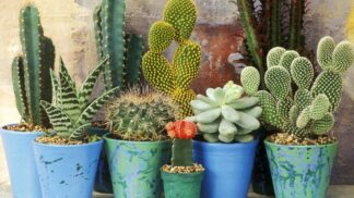 "10 extrémně nenáročných pokojových rostlin, které ""neumřou"" ani lenochovi"