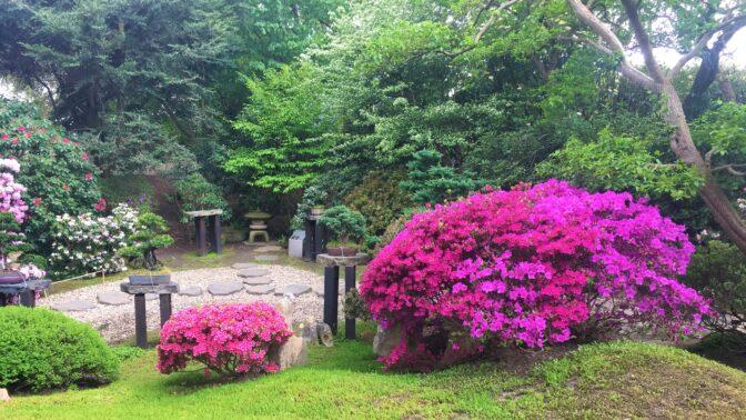 Samý květ a málo lidí. Pražská botanická zahrada aktuálně láká na magický japonský koutek