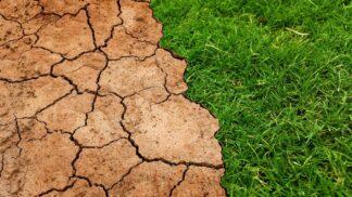 Sucho v Česku ničí zemědělce: Jaká odvětví však vzkvétají?