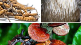 Zázračné houby. Velká naděje pro budoucnost