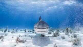 Týden se žraloky v srpnu na Discovery Channel