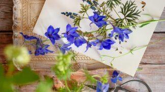 Založte si letos herbář: Budete relaxovat třikrát – při sbírání, lisování a prohlížení