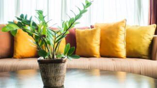 Přírodní čističky vzduchu: 6 rostlin pro zdravé klima
