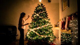 Vánoční stromek v květináči? Pomozte za stovku chránit přírodu!