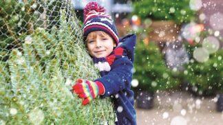 Vybíráme vánoční stromeček: Jak poznat, že je čerstvý a vydrží nám do Vánoc?