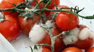 Plíseň na potravinách: Je po seškrábání jídlo nezávadné?