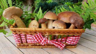 Houbařské žně začínají aneb Netradiční recepty z hub, které nahradí smaženici s bramboračkou a pomůžou vám se zdravým stravováním