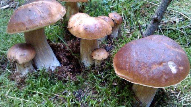 Mapa houbařských oblastí ČR: Po velkých vedrech přichází déšť a vy konečně můžete vyrazit do lesa na houby