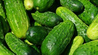 Okurka jako lék na cukrovku, celulitidu a pomocník při hubnutí