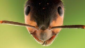 Pozoruhodní mravenci. Umí zemědělčit a mohou mít i otroky