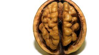 9 zajímavostí o lidském mozku. Proč se bojíme u hororů a proč je mozek taxikářů větší?