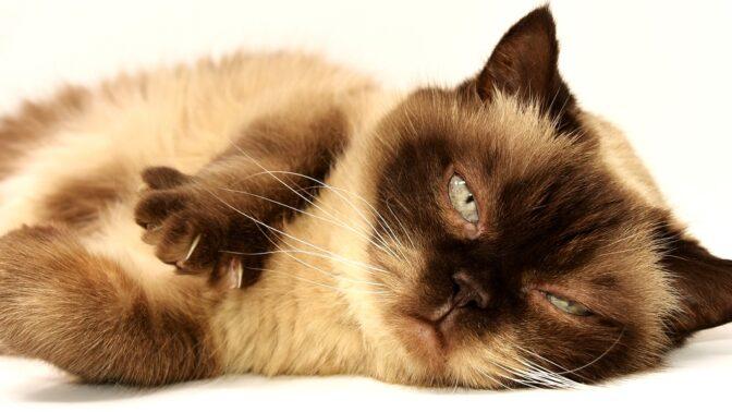 Kočka nejenom v roli mazlíčka. Na člověka umí působit i jinak