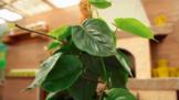 Kouříte doma? Těchto 6 květin vám zlikviduje toxiny z obýváku