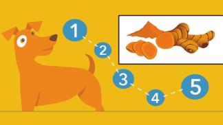 Není vašemu psovi do štěku? Okořeňte mu granule kurkumou – a potíže ustoupí!