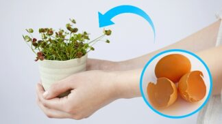 Nevyhazujte vaječné skořápky. Použijte je jako hnojivo, křídu nebo čisticí prostředek!