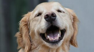 Těší, ale i vnímají, hecují a vychovávají. 4 způsoby, jakými domácí mazlíčci posilují naše zdraví