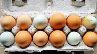 Proč jsou hnědá vejce dražší než bílá? Kvalita nehraje roli