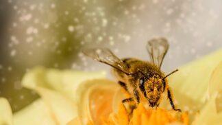 Zázračné léky z přírody: Včelí pyl chrání před mrtvicí, med vám zajistí lepší spánek