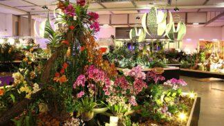 Velikonoční veletrh s prodejní výstavou orchidejí: Skvělý důvod, proč se vypravit do Drážďan