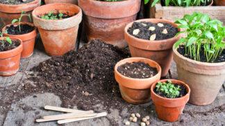 Zahrádkářská sezona začala: Jak vybírat rostliny, aby skutečně vydržely