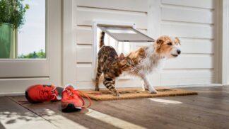 Zákeřní parazité ohrožují naše domácí mazlíčky! Ověřené přípravky, které pomáhají