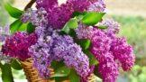 Horoskop jarních květin: Která je ta vaše?